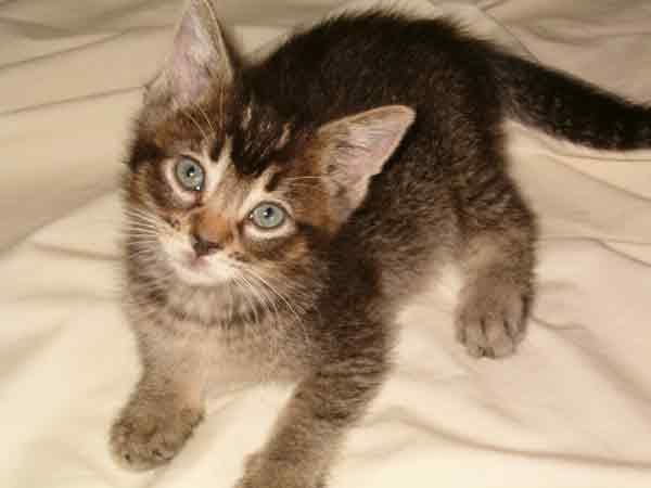 Kalihi the kitten